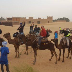foto grupo camellos